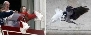 Colombe de la paix attaqué devant les yeux du Pape