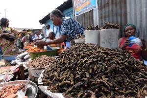 A Kinshasa, on croque chenilles ou larves pour le plaisir et les protéines © AFP