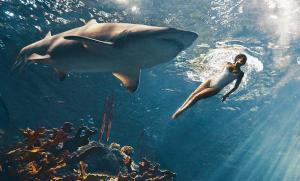 Riri et le requin au fond de l'eau