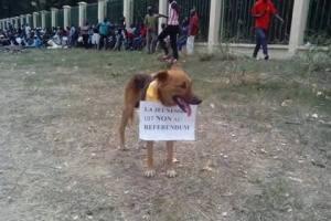 Les animaux aussi disent NON à Sassou pour son 3e mandat